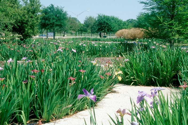 Botanical Gardens Baton Rouge Garden Ftempo